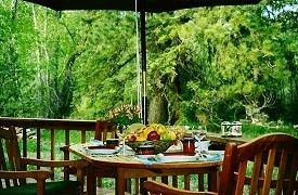 Antonito cabin photo - Deck Dining With View of Woods