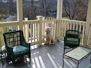Warm Springs house photo - A four legged guest enjoys the back porch.