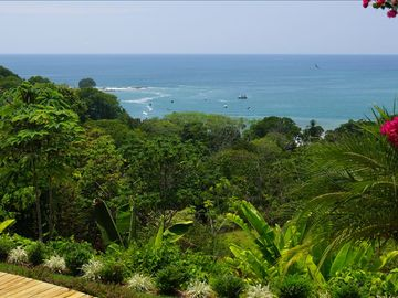 Robust tropical forest growth overlooking Dominicalito Bay