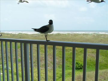 Friendly Seagulls from the Balcony