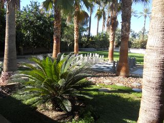Indian Wells estate photo - Giant checkers among the palms