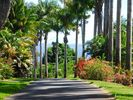 Our location on Old Onomea Road is one of the prettiest lanes on the island! - Hilo studio vacation rental photo