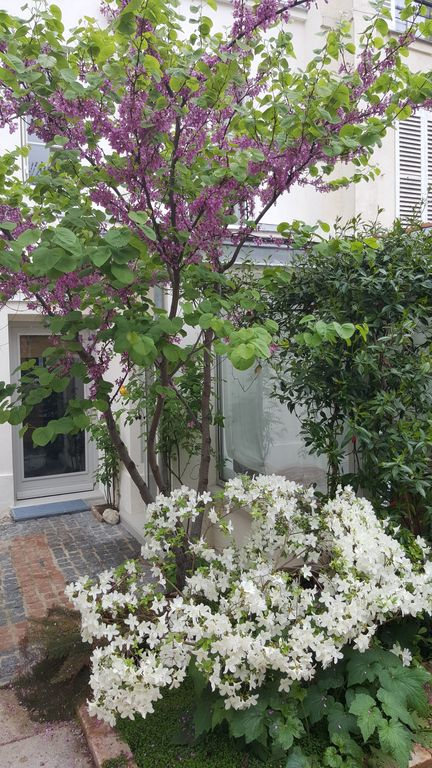 Design apartment on private garden in the heart of Batignolles.