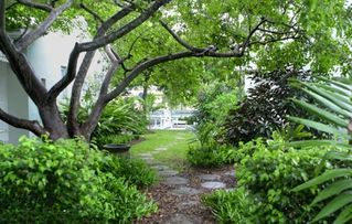 Coral Gables apartment photo - Tree-shaded paths