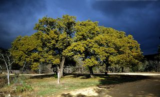 Bandera cottage photo - Dramatic-Texas-Sky...and a photo opportunity extrordinary!