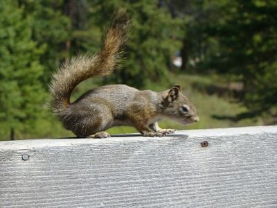 Rocky squirrel hangs around for handouts. Very choosey! Unsalted Peanuts only!
