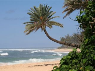 Haleiwa condo photo - Surf, Snorkel We Have So Many Beaches