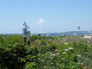 West Yarmouth condo photo - wild flower field