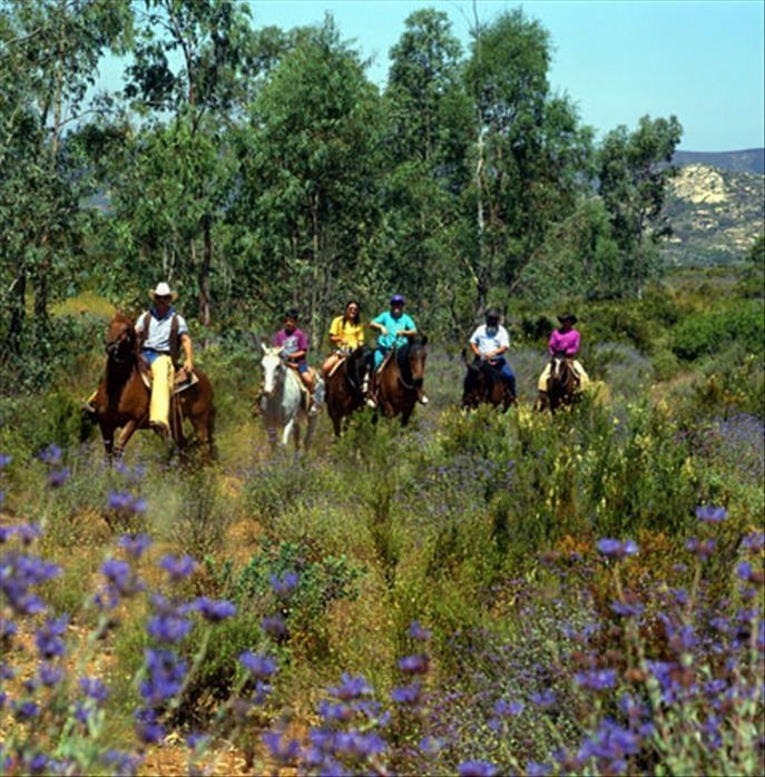 Nearby Horseback Riding