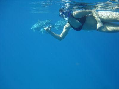 Inquire about discounts on tours like Snorkeling with Wild Dolphins