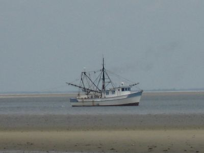 When you see a shrimp boat, a dolphin is usually not far behind!
