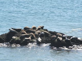 Malibu apartment photo - Enjoy viewing wildlife from your vacation rental