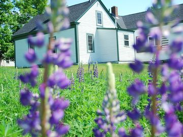 back view of the house from the lupine field