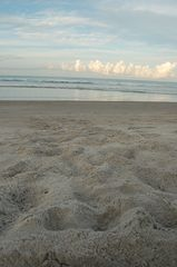 Cocoa Beach house photo - Sea turtle tracks....possible May through October