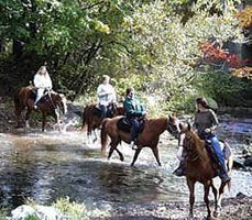 Masthope chalet photo - Take a horseback ride through Masthope wooded nature trails!
