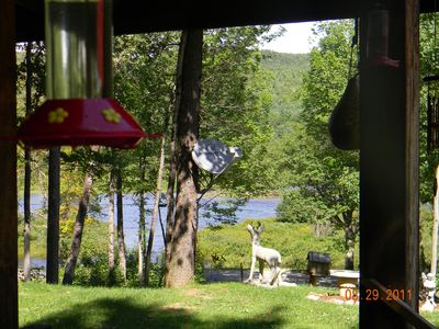 View the river from the cabin's porch while humming birds feed!