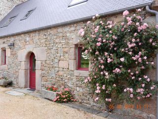 Perros-Guirec cottage photo - Rose bush on the southern facade of the gîte