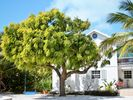 Turks and Caicos Apartment Rental Picture