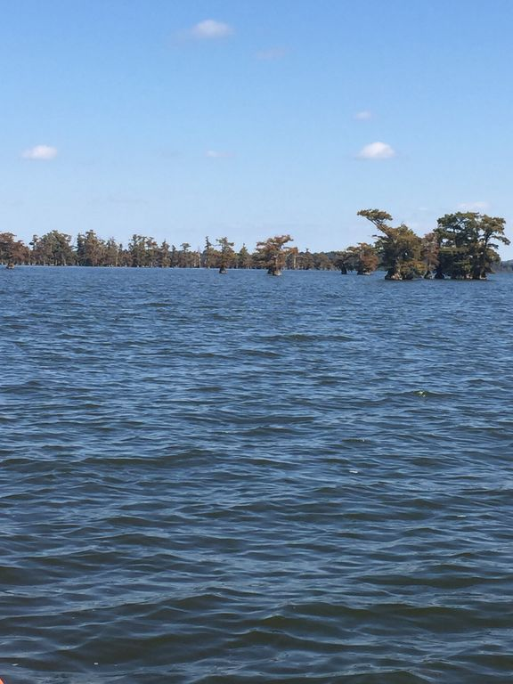 Everything new book now for fishing vrbo for Reelfoot lake fishing report