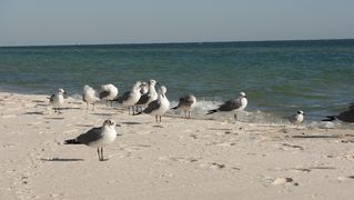 Gulf Shores cottage photo - Beach Bird Gallery