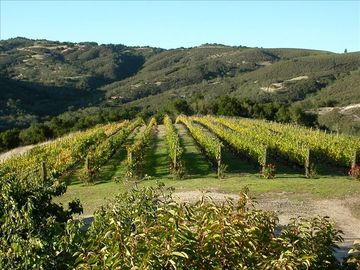 Carmel Valley house rental - Views Of Vineyard From Your Cottage
