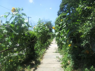 The path to the house