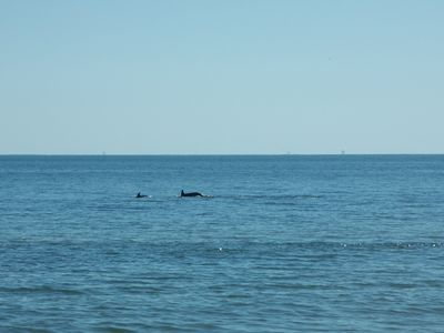 Watch the Dolphins on Their Daily Swim to Mobile Bay