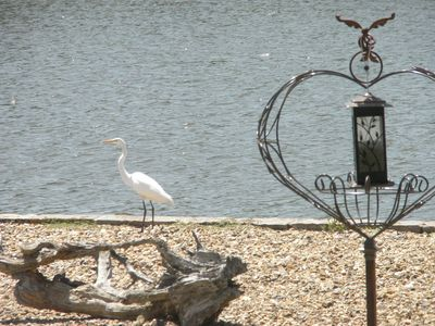 Many Different Waterbirds at this Lake. This Bird Hung Out in Our Backyard.