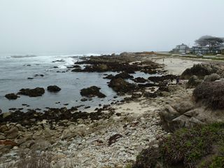 Pacific Grove house photo - Tidepooling beach 3 blocks away.