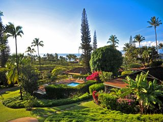Kaanapali cottage photo - View from Dolphin Cottage: swimming pool, palms, and ocean!