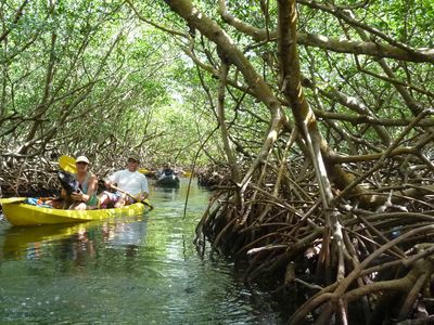 The mangrove tour on kayaks is spectacular.