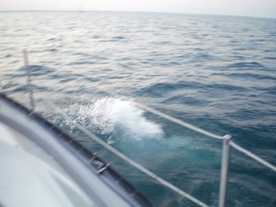 Salmon fishing charters in Lake Michigan