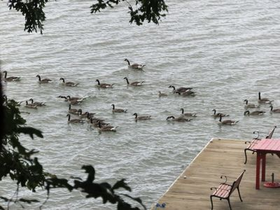 Geese passing by the dock viewed from the front deck