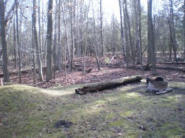 Our backyard, all wooded