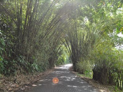 bamboo covered roads