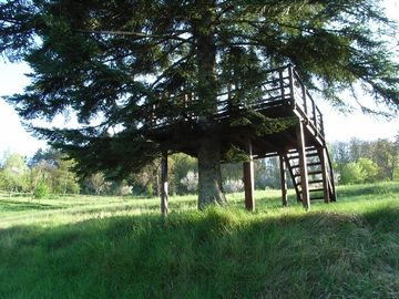 Tree house in garden