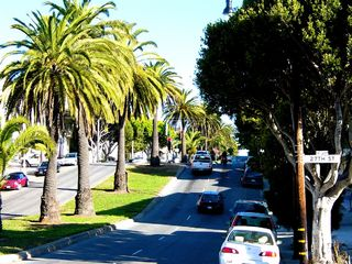 Dolores Street is a wide tree-lined avenue - San Francisco apartment vacation rental photo