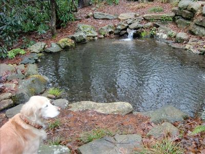 Chloe over seeing her pond.
