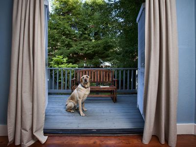 Bring along a furry friend! Ledford Cottage