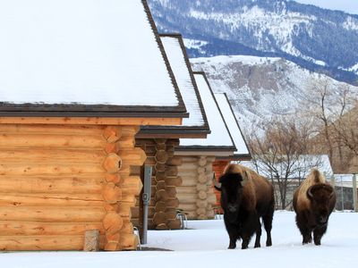 Winter visitors-photo by Brandi Nichols