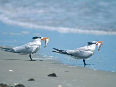 local wildlife on Cumberland Island,accessible by boat