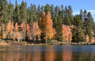 Duck Creek Village cabin photo - Aspen Mirror Lake in the Fall-Great Fishing, beautiful colors