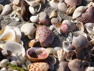 Sanibel Island condo photo - Sanibel Shells