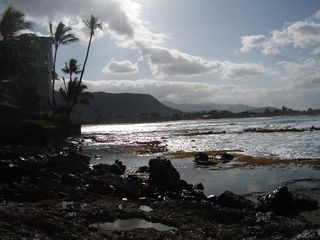 Makaha studio photo - Coral reef frontage at Makaha Surfing Beach. Look for shells or pictures!