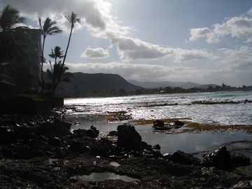 Coral reef frontage at Makaha Surfing Beach. Look for shells or pictures!