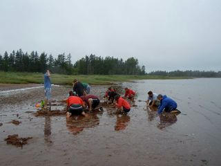 Panmure house photo - a family event - digging for clams at our beach