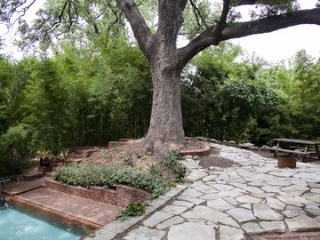 Stone Patio and Majestic Oak