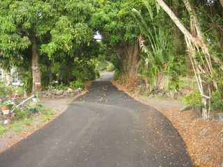 Kailua Kona house photo - Kona Country Road bordered by 100 year old mango trees.