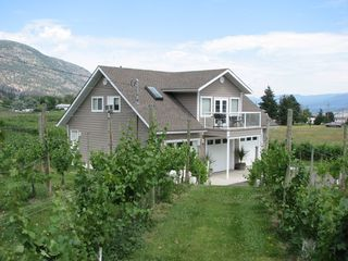 Penticton cottage photo - Vineyard Summer 2011
