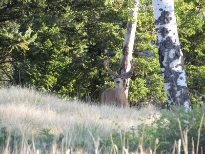 Guffey farmhouse rental - Mule deer seen this fall
